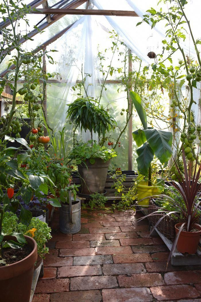 Backyard Designs (With images) | Backyard greenhouse ...