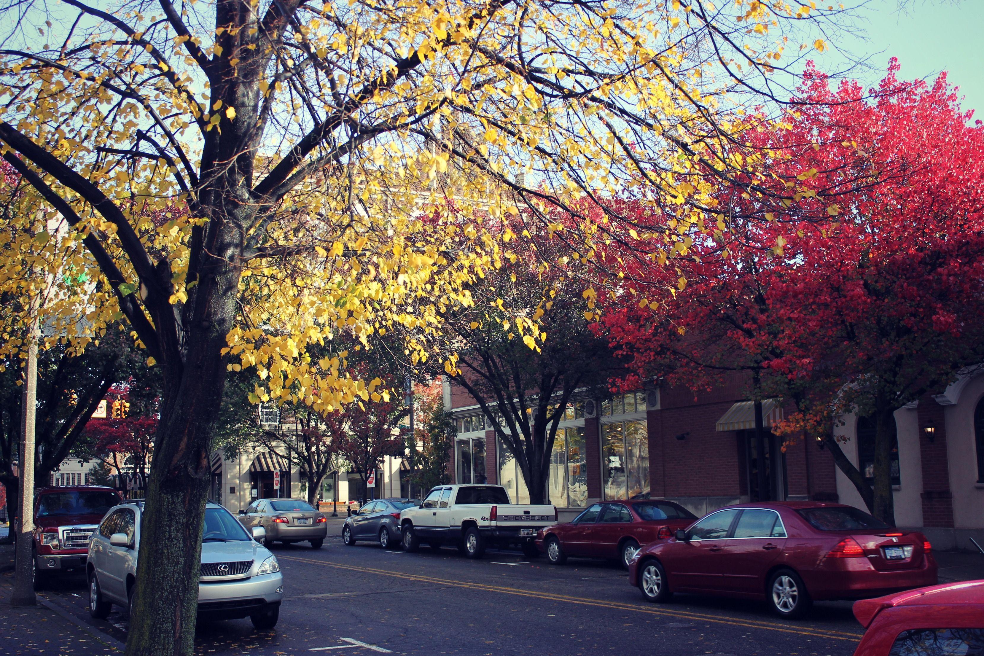 Fall in downtown holland mi