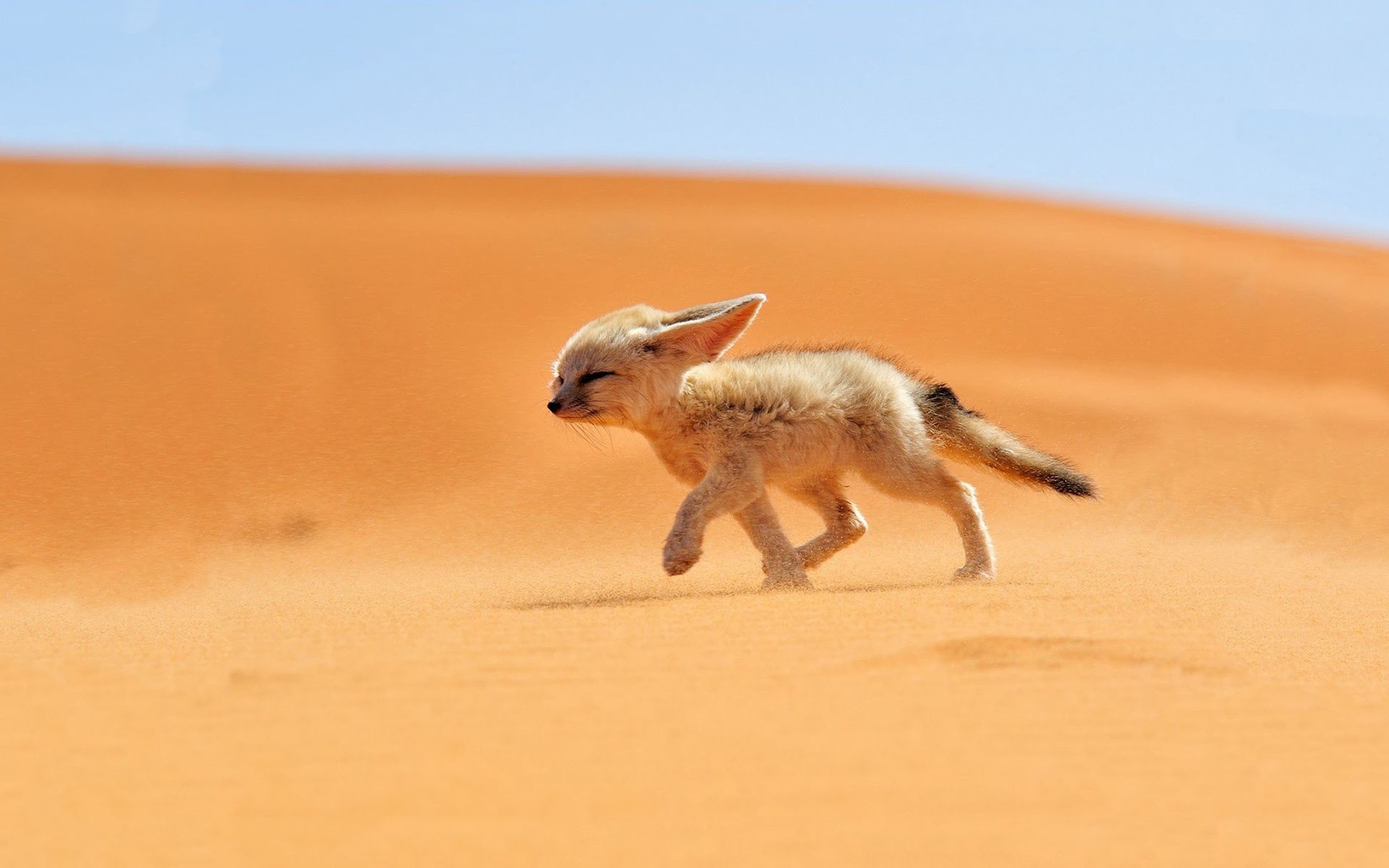 alfa img - showing > baby desert animals | que fofo! | pinterest