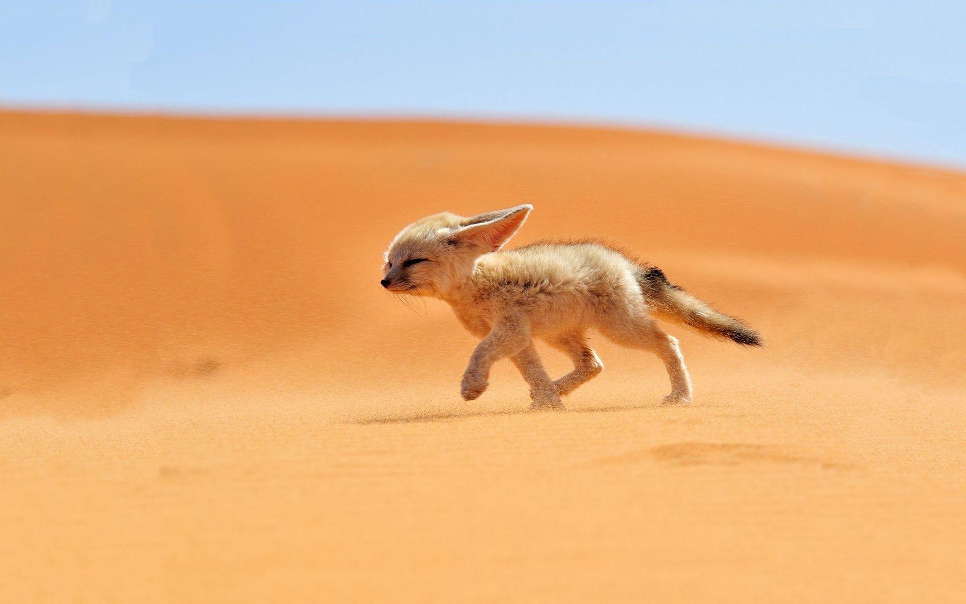 alfa img - showing > baby desert animals | que fofo! | pinterest