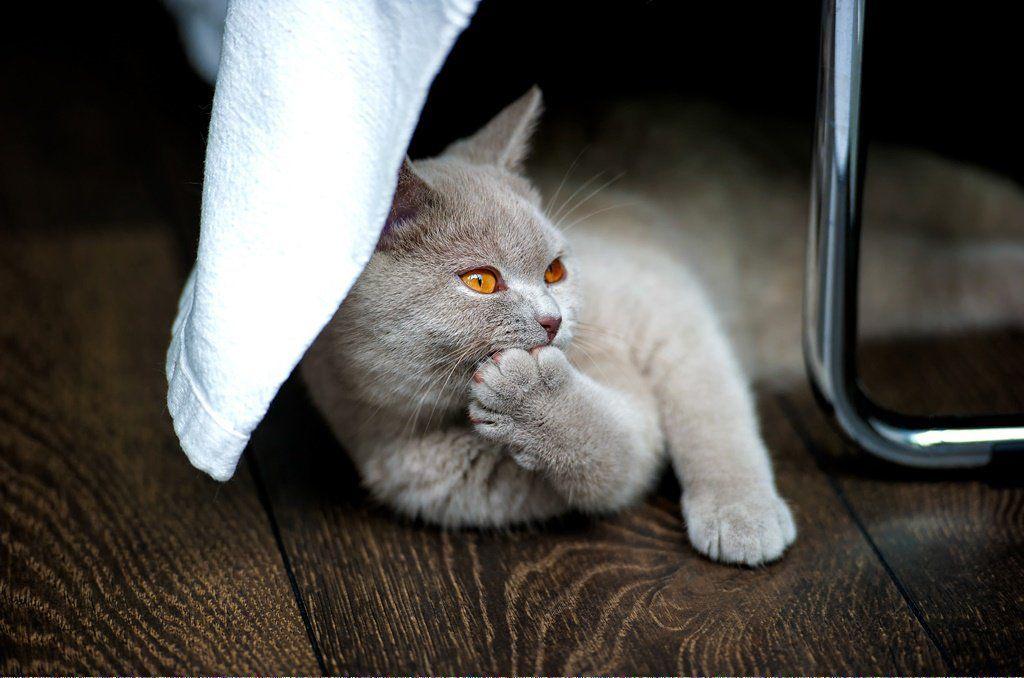 Cats Craigslist Catscharacters Cat Adoption Cat Hug Cat Care