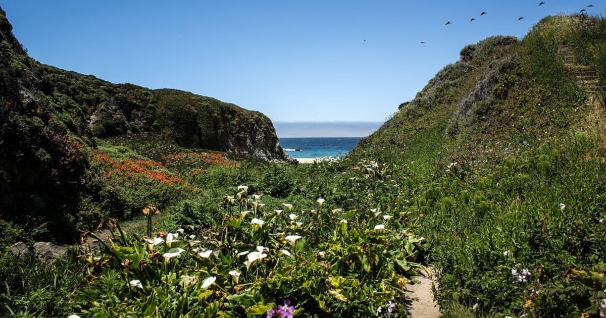 Https Www Co Monterey Ca Us Home Showdocument Id 43120