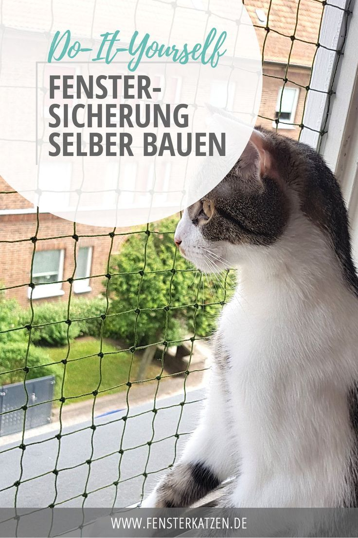 It is summer Since not only the Stubentiger wants to sniff nice fresh air   Blog Beiträge Fensterkatzen