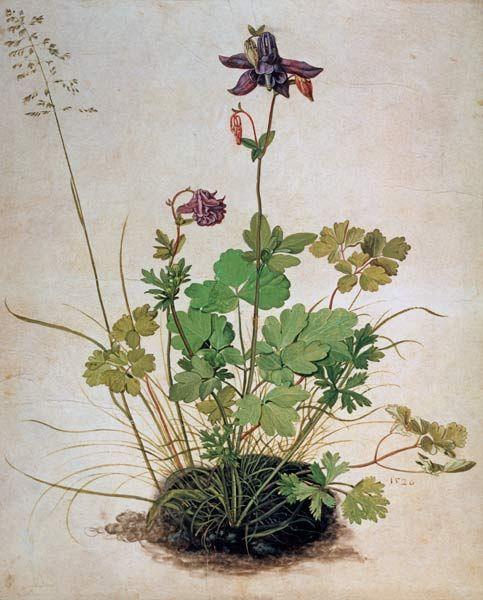 Alte Meister Kunstdruck Albrecht Dürer Akelei
