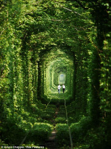 Amos Chapple / Tunnel of Love    Kleven, Ukraine.  #his_green