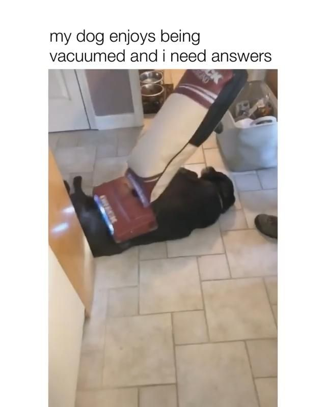 Photo of My dog enjoys being vacuumed and i need answers😍😂