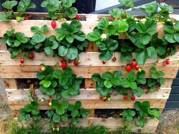 Photo of DIY Upcycled Wood Pallet Vertical Gardens