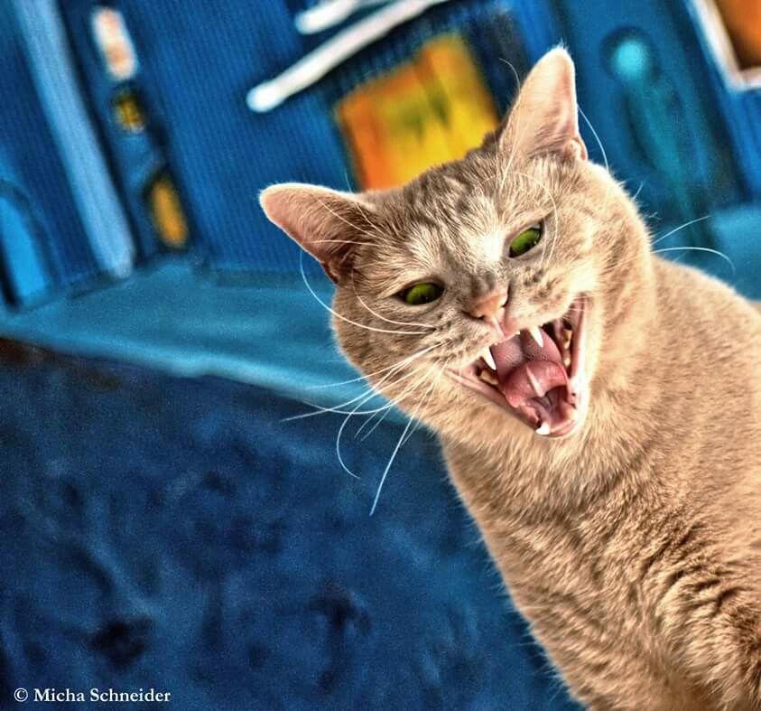 Sind wir nicht alle ein bisschen Bluna? #katze #cat #pets