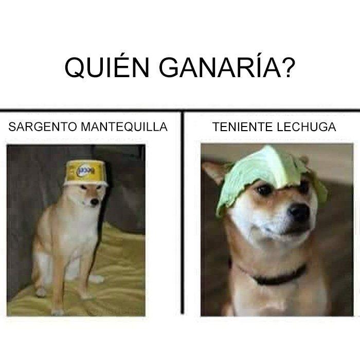 Twitter Memes De Animales Divertidos Memes Divertidos Sobre Perros Memes Divertidos
