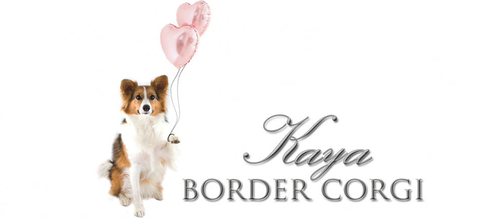 Produkttest Tierliebhaber Anti Zecken Snack Anti Wurm Snack Hunde Hundchen Training Hundetricks