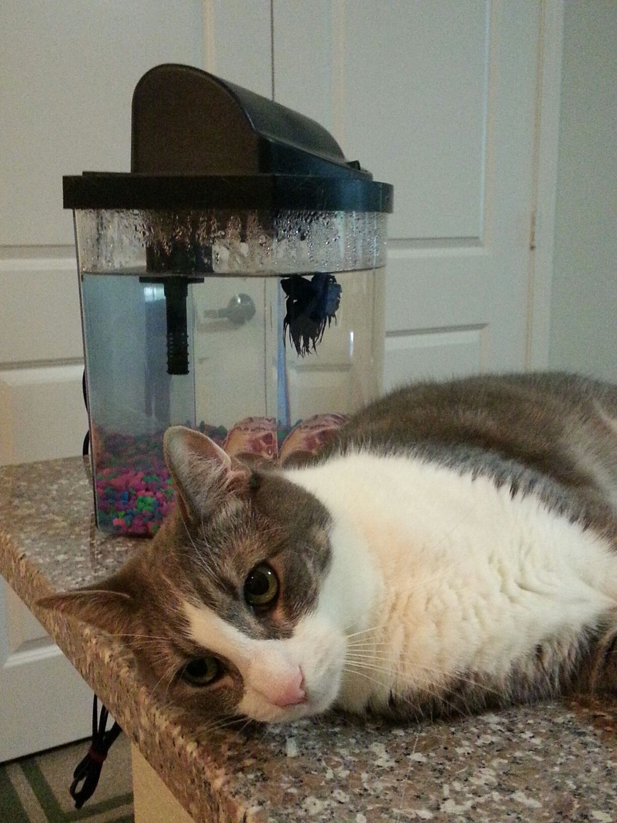 Flanny guarding the beta fishy. Pet care, Pets, Cute animals