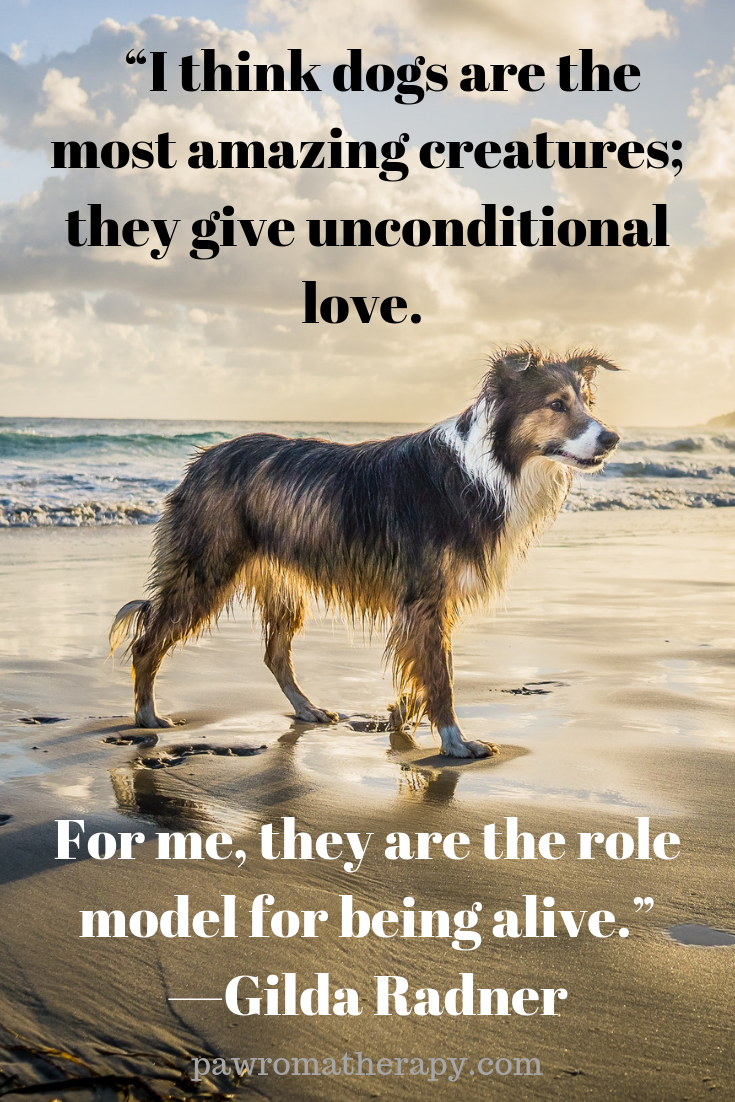 Dog Quote Holistic Pet Natural Pet Dog Quotes