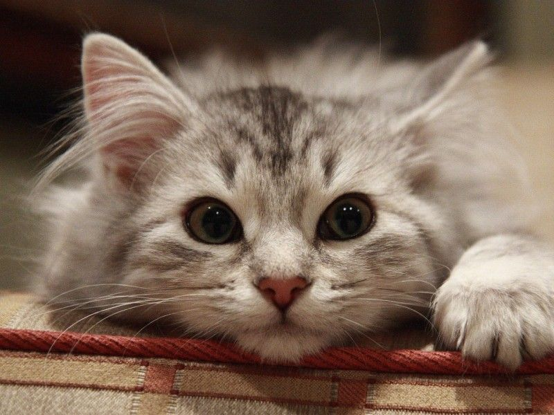 Tier Bild - Katzenbilder, Schöne