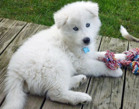 Yeti The Husky Mix Cute Dogs And Puppies Cute Puppy Names
