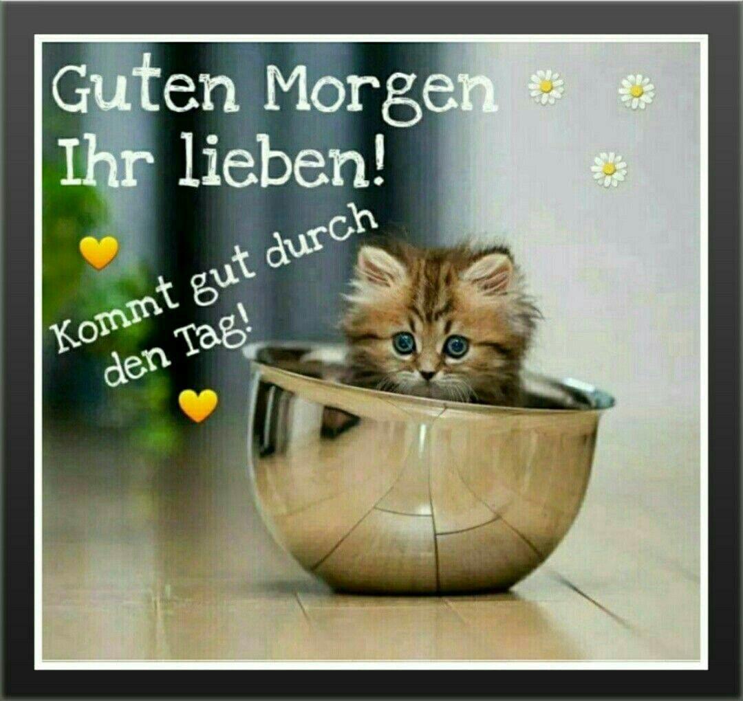 Guten Morgen, Katzenbild | Von/Bis | Good morning, Good ...