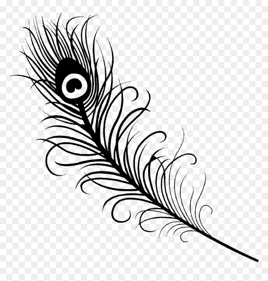 Peacock Feather Vector Silhouette Hd Png Download Feather Outline Png Peacock Feather Drawing Feather Drawing Peacock Coloring Pages