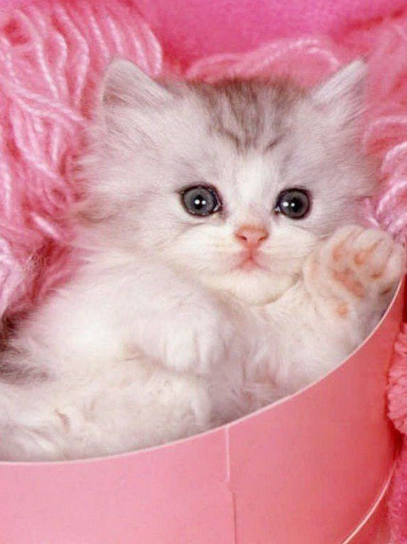 Country Shabby Rustic More Cute Cat Wallpaper Cute Cats And Dogs Cute Cats And Kittens