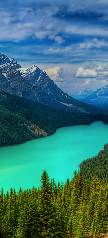 peyto lake banff national park canada yes it is really. Black Bedroom Furniture Sets. Home Design Ideas