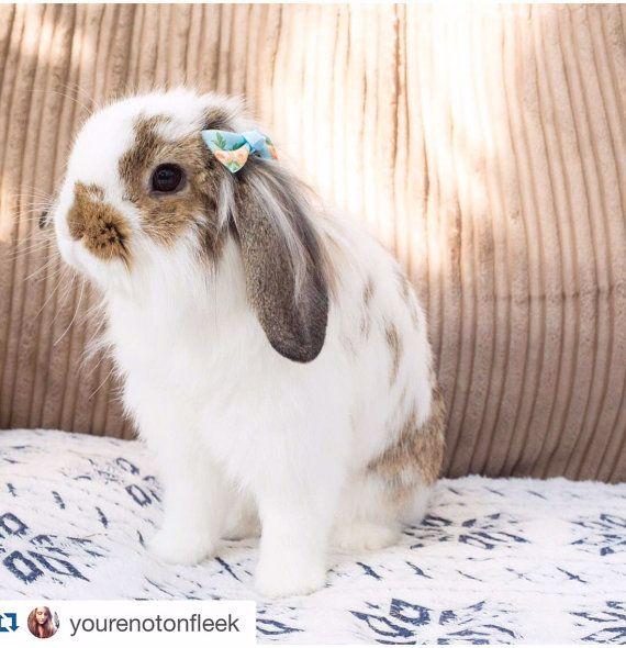 Pretty bunny <3