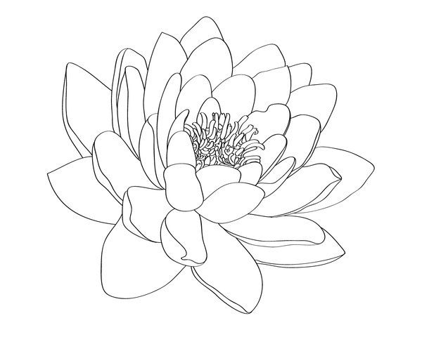 Water Lily Tattoo Design By Selective Universe On Deviantart Water Lily Tattoos Lily Tattoo Design Lily Tattoo