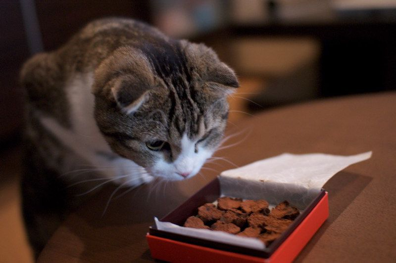 20 Human Foods That Are Deadly To Cats Human Food For Cats Siberian Cats For Sale What Cats Can Eat