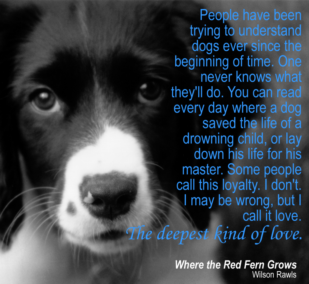 Red Dog Quotes