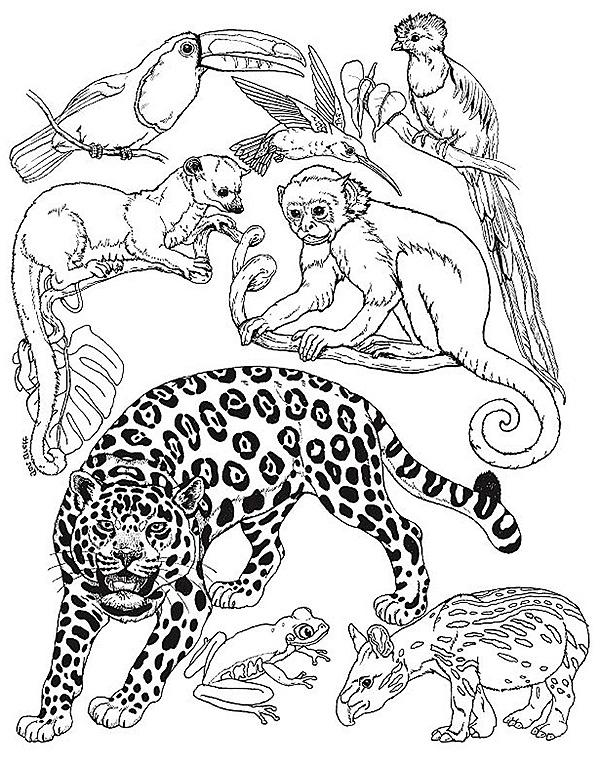 Umbrella Mural Small Animals Rainforest Animals Coloring Pictures Of Animals Animal Coloring Books