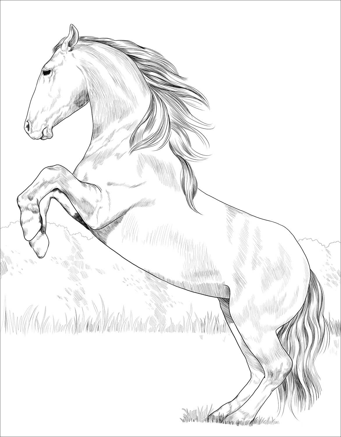 Lusitano Horse Coloring Page Horse Coloring Horse Coloring Pages Horse Coloring Books