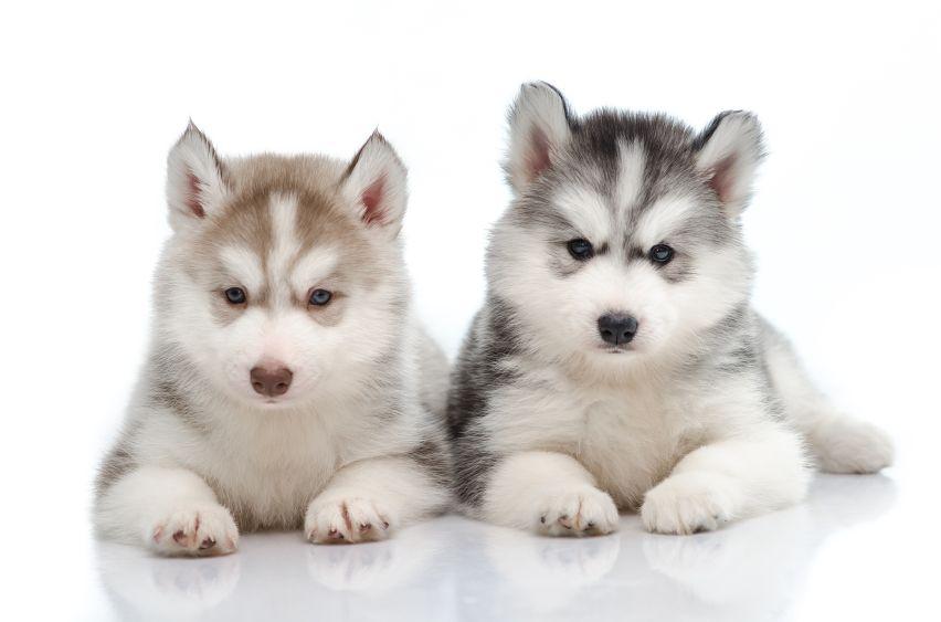 Cruel Dog Training For Iditarod Sled Dog Action Coalition Dog