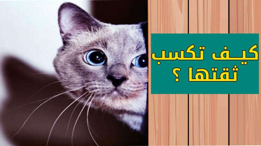كيف تكسب ثقة القطط وكيف تجعلها تتعلق بك وتحبك أكثر من الجميع عشاق القطط حول العالم Animals Cats