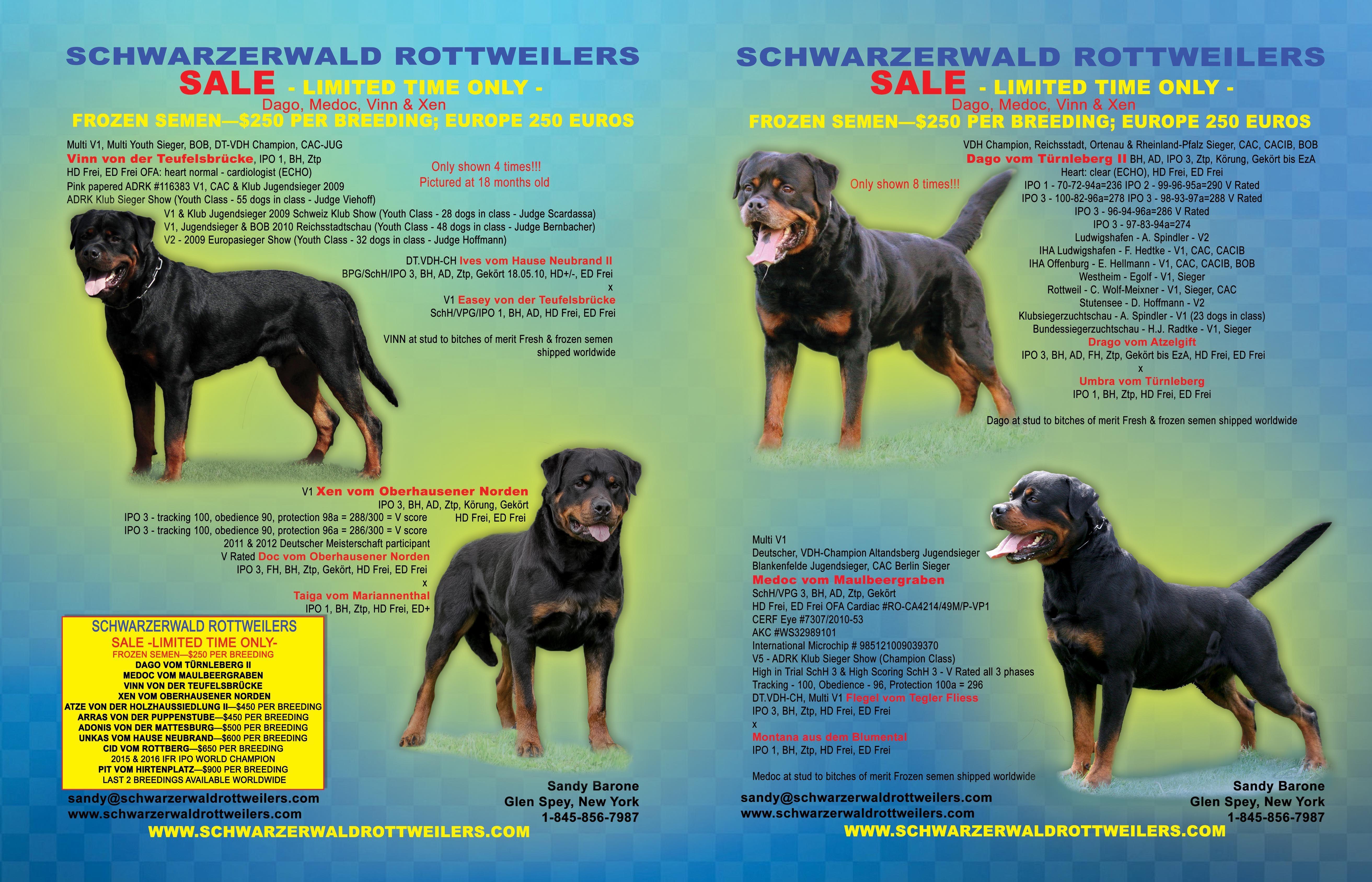 Schwarzerwald Rottweilers Sandy Barone Glen Spey New York 917 681 6511 Sandy Schwarzerwaldrottweilers Com Www Schwarzerwaldr Rottweiler Love Rottweiler Norden