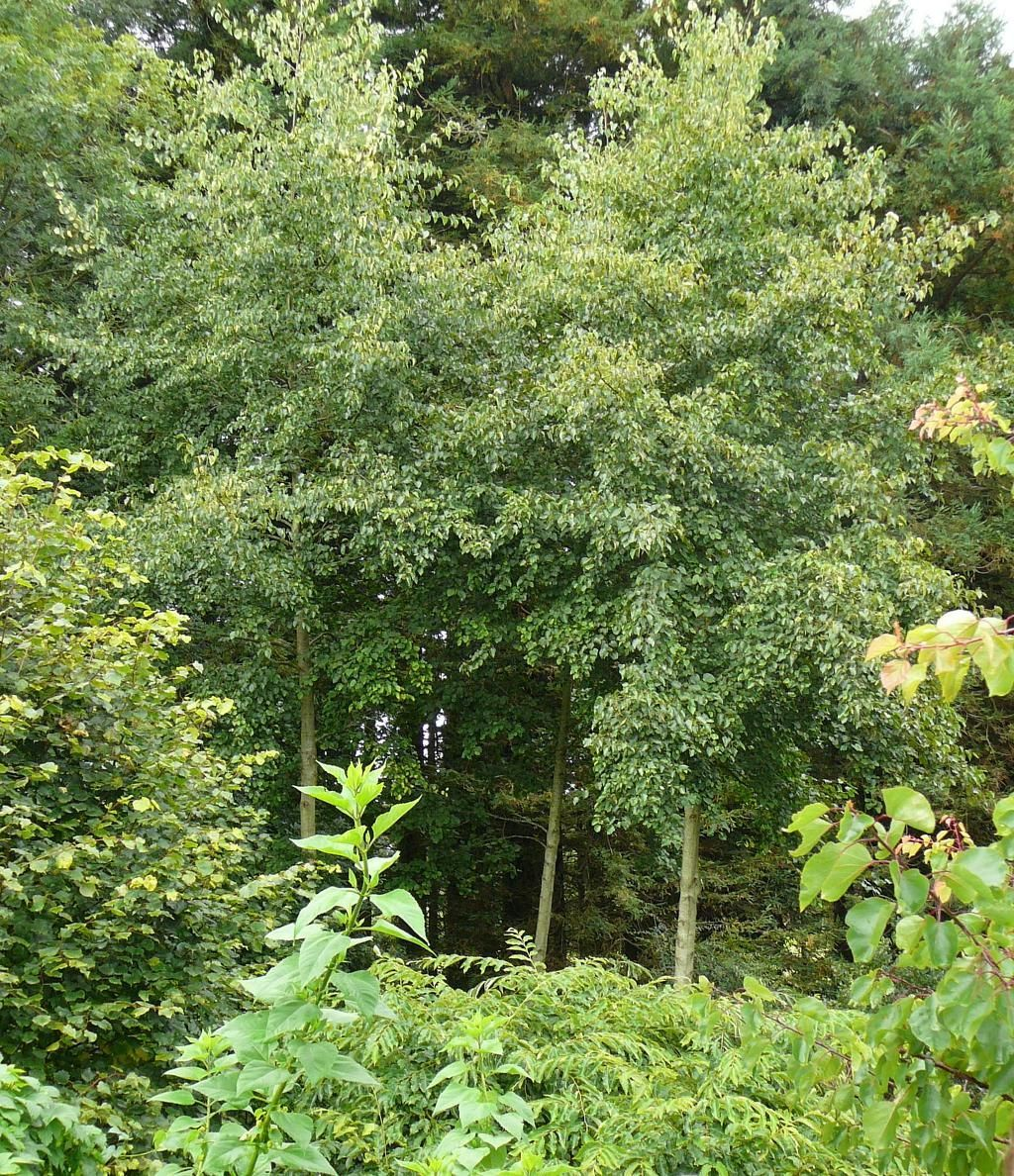 Environmentally Forest Gardening In Your Yard Yards and Gardens
