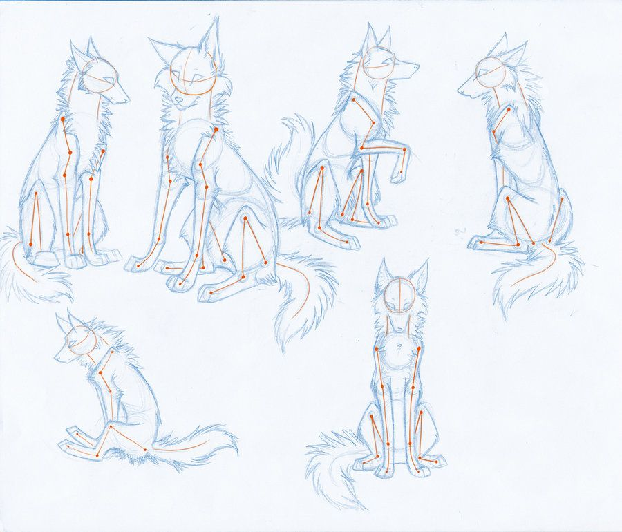 HowToDrawWolves: SittingPoses by ~Kimai on deviantART ...