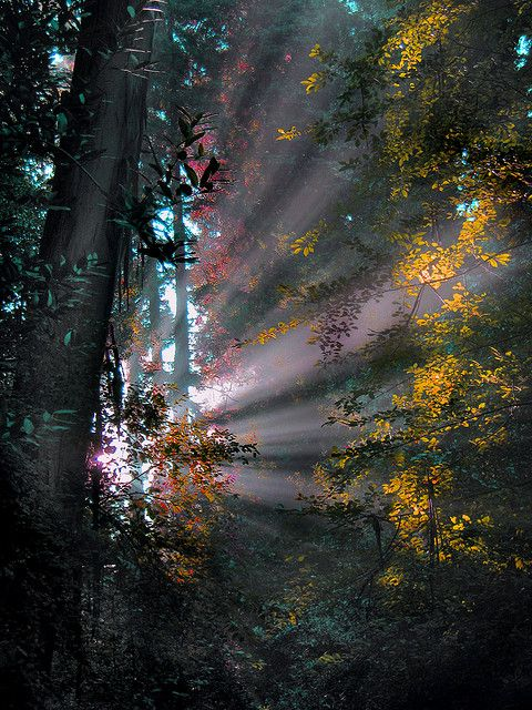 Forest Rays by architect41 on Flickr. early morning sun after the previous day's heavy rains caused the mist and crepuscular rays on the Pal...