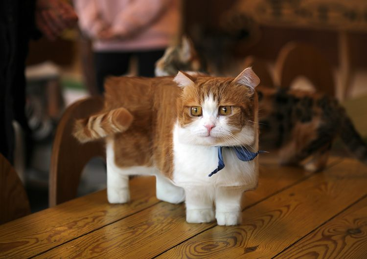 Photo Retoucher Transforms Real Life Animals Into Cubed Creatures From Minecraft Munchkin Cat Cute Cat Breeds Munchkin Kitten
