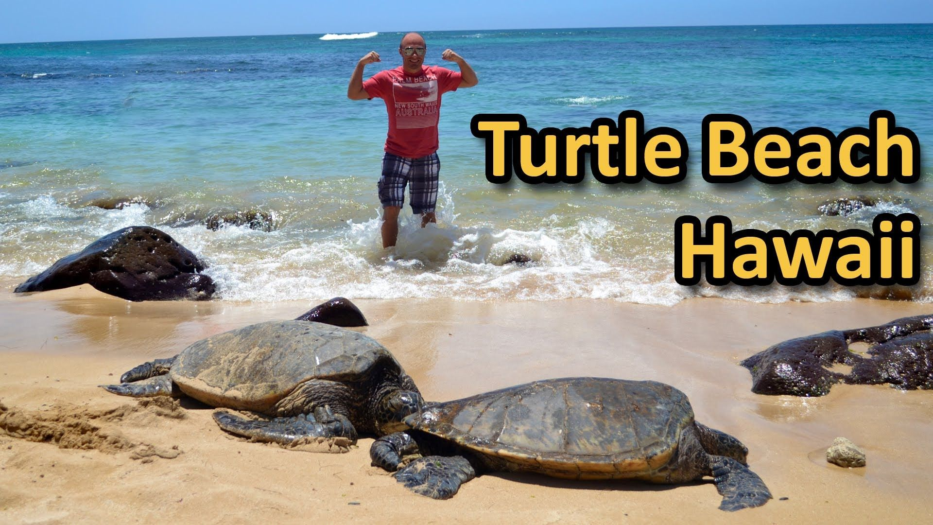Turtle Beach In Hawaii Laniakea North S Oahu You