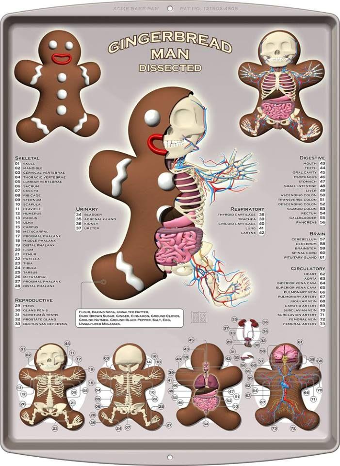 Awesome! Gingerbread man, Man anatomy, Gingerbread