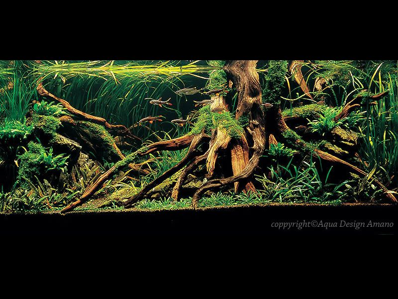 Rainforest Inspired Tree Roots Aquascape I Need These