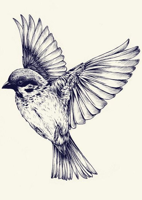 Pin By Orlando Andres Martinez On Art Inspiration Bird Drawings Eye Tattoo Bird Sketch