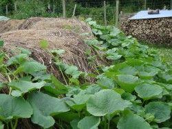 Blog Natuurlijke Moestuin | Hoe Wij Pompoenen Kweken | http://blog.natuurlijkemoestuin.be
