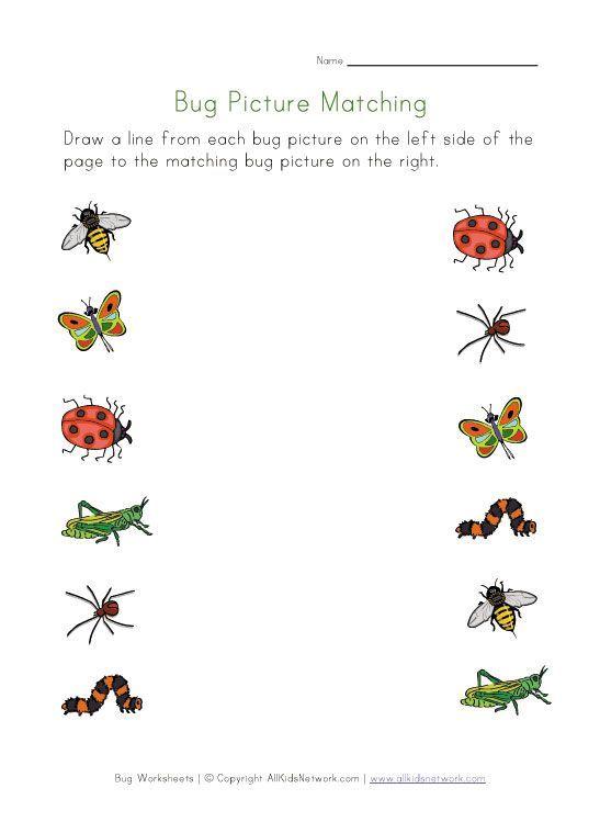 Bug Worksheets For Kids Cool Science And Nature Photography Bugs Preschool Printable Preschool Worksheets Preschool Worksheets Types of bugs for preschoolers
