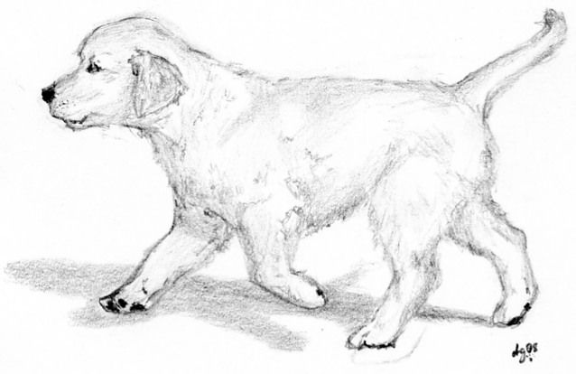 Golden Retriever Puppy By Dontwannamakeit On Deviantart Puppy Coloring Pages Animal Kingdom Colouring Book Enchanted Forest Coloring Book