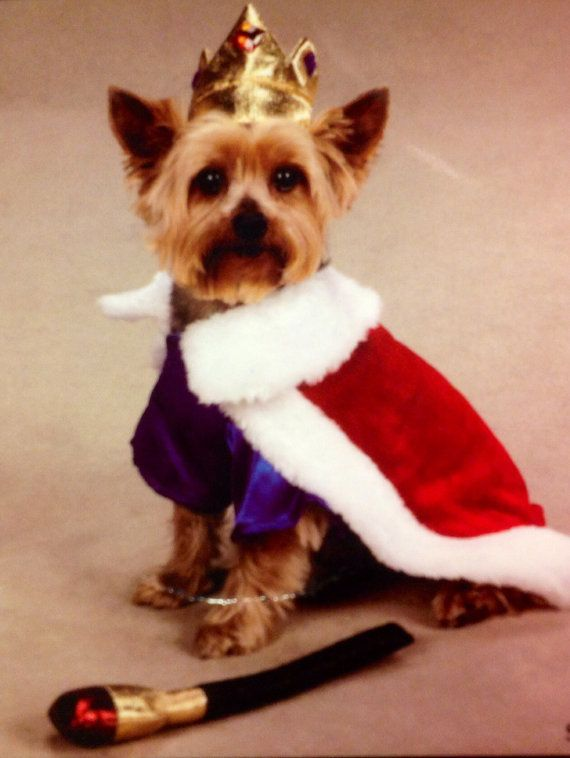 Royal King Dog Costume Perfect For Your Little Prince Halloween