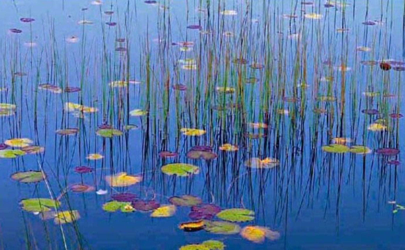 Water Lilies  by Peter Lik - Silver Halide Fuji Crystal Archive Print