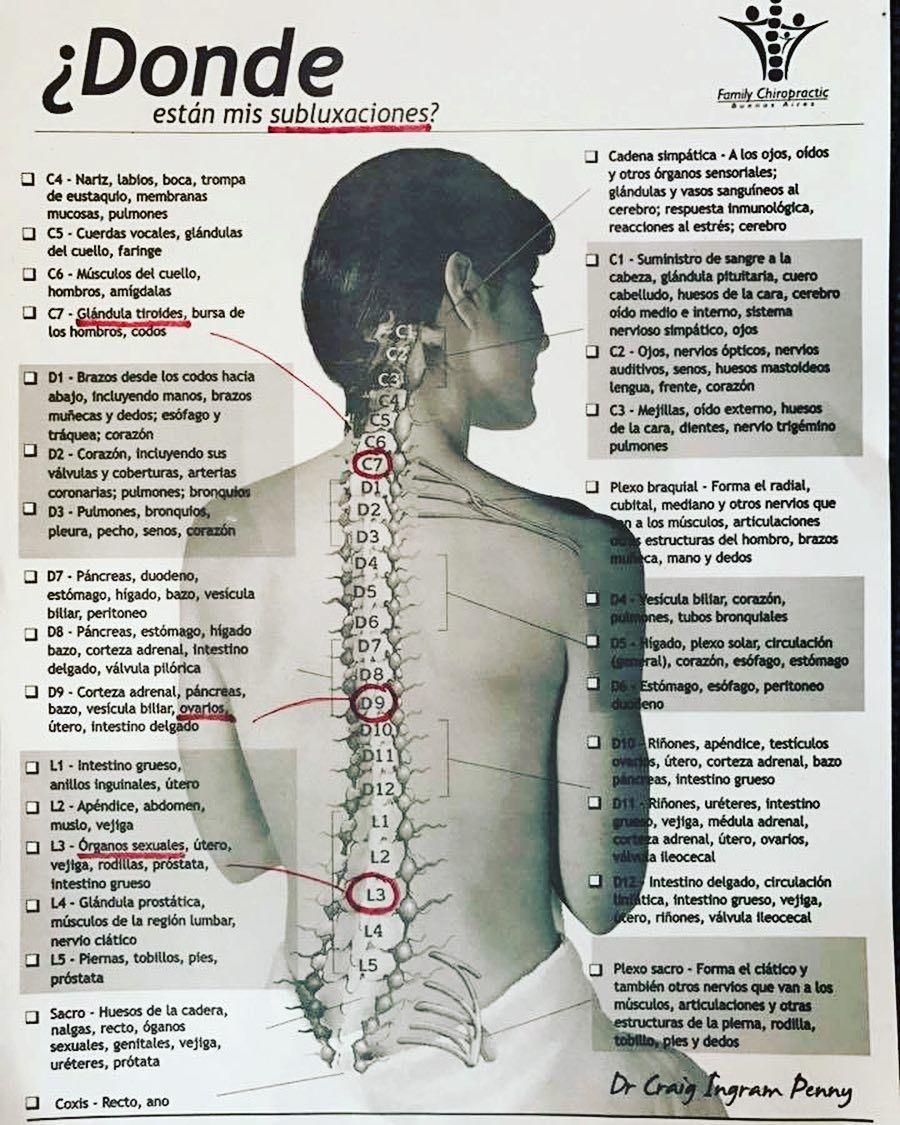 vasos y nervios de la prostata