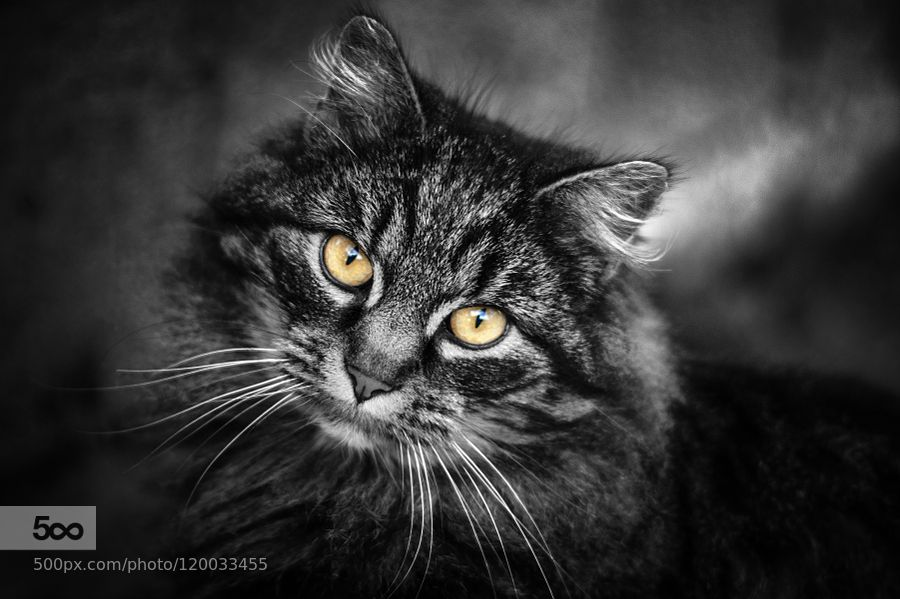 The Cat by wmoritzer #nature