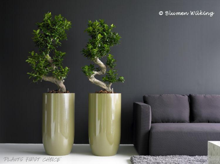Blumen Wilking blumen wilking bielefeld innenraumbegruenung indoor plants