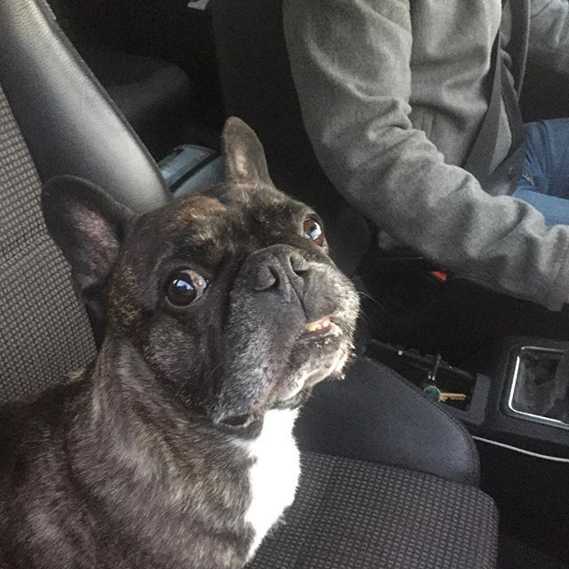 Mommy Says That It Should Work I Take Your Seat Frenchbulldog