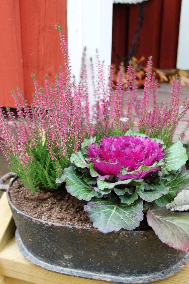 d co d automne romantique avec la bruy re erica pour l int rieur et l ext rieur jardins. Black Bedroom Furniture Sets. Home Design Ideas