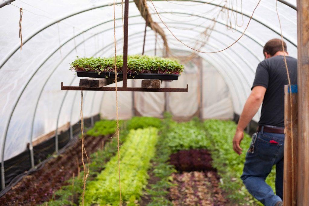 New Online Course Profitable Urban Farming Urban farmer